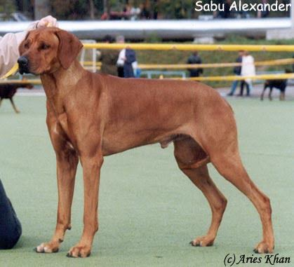 SABU ALEXANDER 4