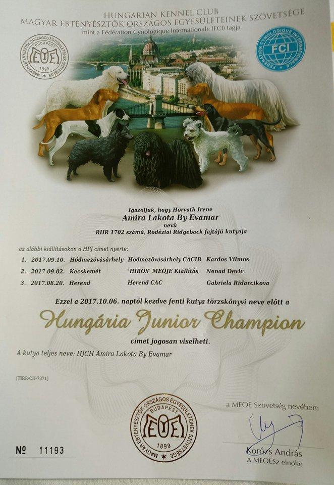 Amira Diplom